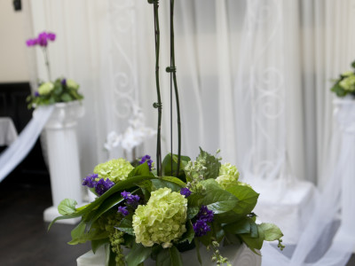 Wedding orchid